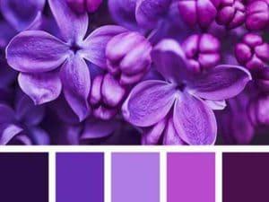 Как получить сиреневый цвет при смешивании красок – секреты и тонкости