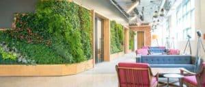 Эко-дизайн и Озеленение помещений в доме: Польза, Виды и Топ 7 лучших растений для дома и офиса - Обзор + Видео