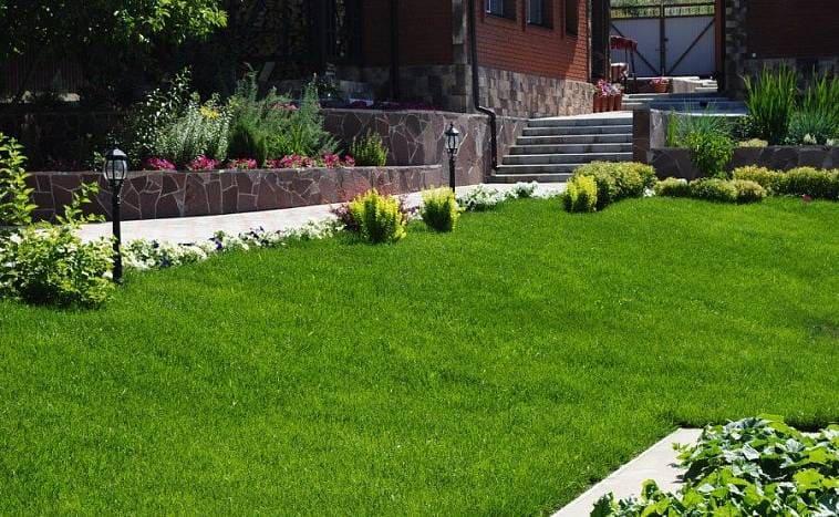 Что нужно знать о выборе травы для газона