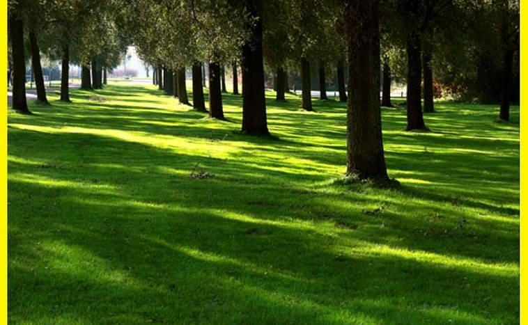 Климатические составы трав для газона