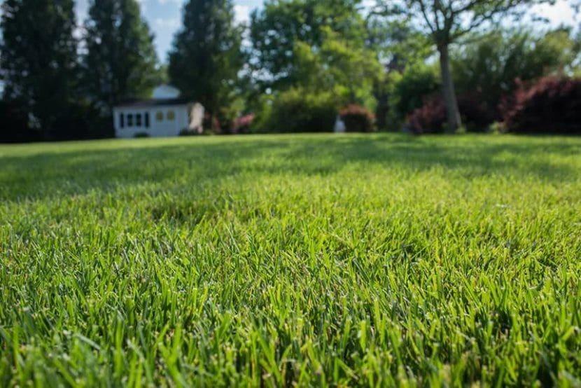Какую выбрать траву для посадки газона