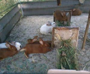 Как сделать вольеры для кроликов своими руками? Обзор и пошаговая