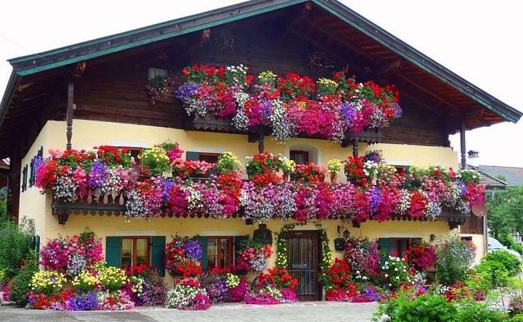Фасад здания, украшенного цветущими растениями в контейнерах