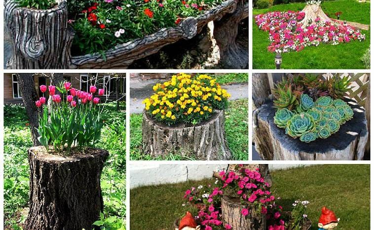 Яркие, необычные рутарии для сада
