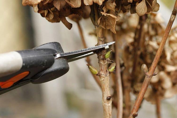 Душистый табак: описание, виды и сорта, особенности посадки и ухода