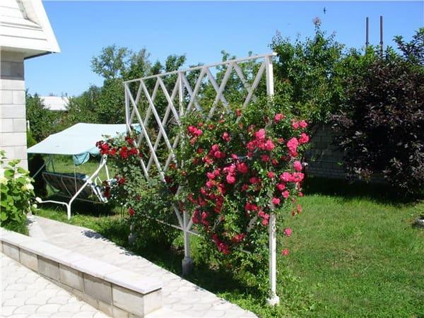 Описание и выращивание роз Фламентанц